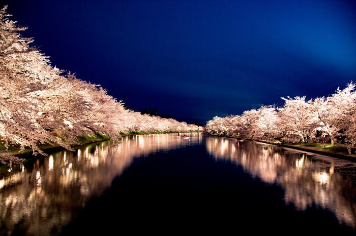 弘前の桜は、1715年に、京都の嵐山から持ち帰られたものから始まりました。 現在では、約2,600本の美しい桜を見に、世界中から観光客が訪れます。
