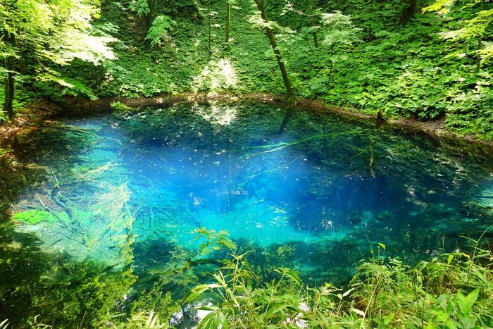 白神山地のふもとにある、大小33の湖がつらなる十二湖。 その中でも、美しいのがこの【青池】。