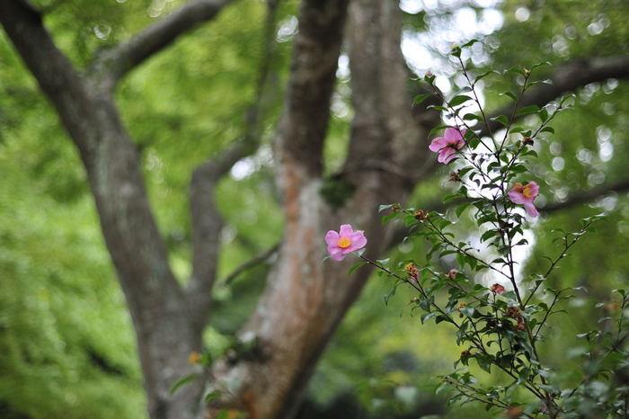 「妙本寺」は、鎌倉の中心部にありながらも、静寂で落ち着いた雰囲気。
