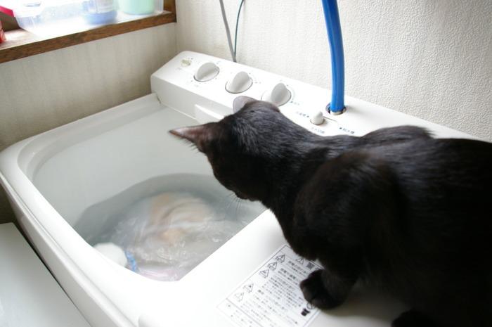 一番汚れが取れることで根強いファンのいる二層式洗濯機は、すすぎの水がきれいになってから投入します。 ためすすぎの場合は2回目以降に投入し、そのあと2~3分回して、普通に脱水をかけます。