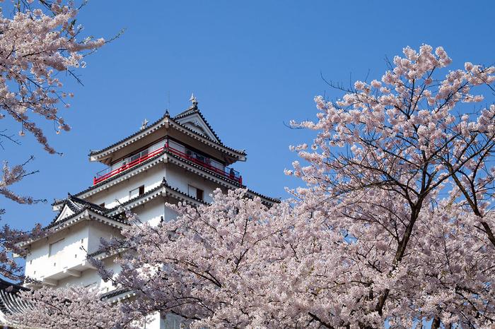 こちらは、リニューアル前の黒瓦の鶴ヶ城。地元では一般的に鶴ヶ城と呼ばれ、地元以外の方からは会津若松城と呼ばれることも多いそう。 また、さくらの名所百選の1つにも数えられる「鶴ヶ城公園」は、ソメイヨシノを始めとする約1000本の桜が咲く桜の名所でもあるのです。