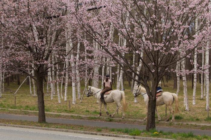 八ヶ岳の広大な自然の中を乗馬で楽しめるプランも。特に紅葉の時期はおすすめです。