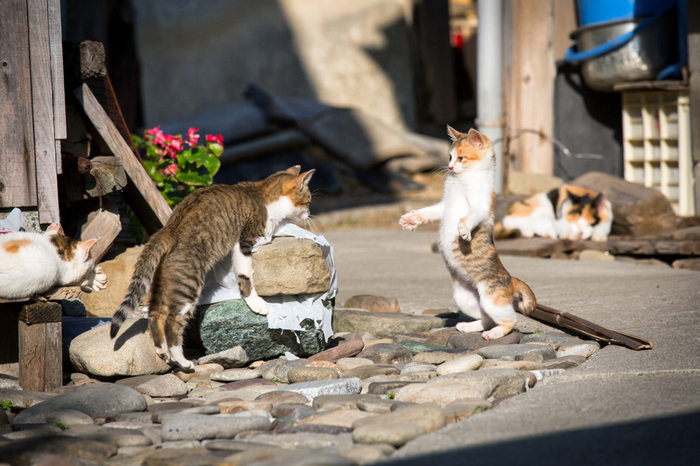 愛媛県大洲市にある小さな島「青島」には、島民15人と猫100匹以上が暮らしています。 猫の楽園と呼ばれ、猫好きにはたまらないスポットのひとつです。