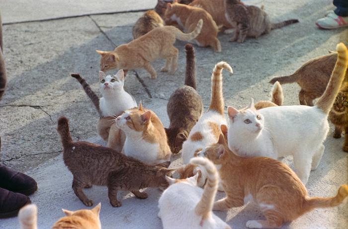 到着し島に降りた途端、いたるところに「にゃーにゃー」と猫だらけ。 少し圧倒されてしまうかもしれませんが、猫好きにはたまらないですね。