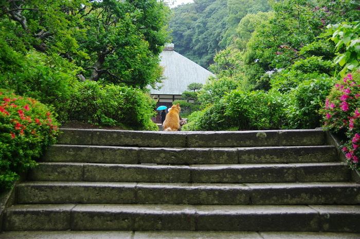 神奈川県鎌倉市にある浄妙寺。 1188年に極楽寺という名で創建され、約100年後「浄妙寺」に改名されました。