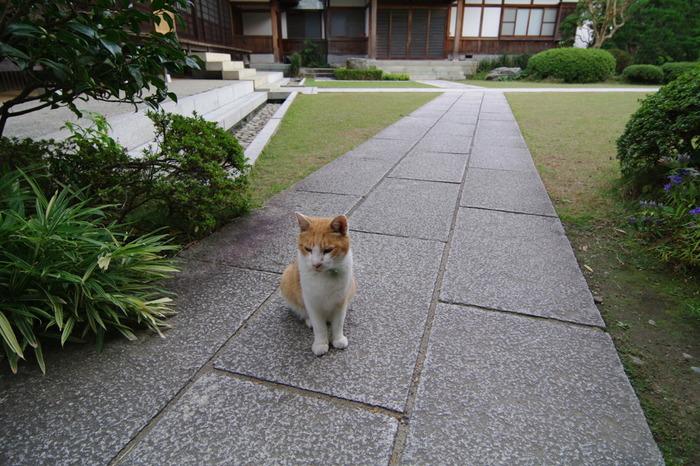現在は7匹の猫が暮らしているそうですが、みんなに会えるでしょうか。