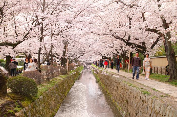 桜の名所でもある京都の「哲学の道」 大正時代、京都帝大の哲学者たちが好んで散歩した道です。