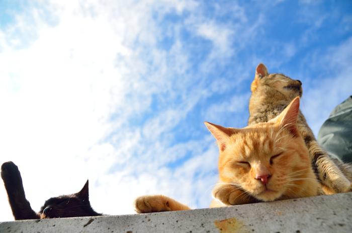 写真を見ているだけで癒されますね。 どこの猫たちも人懐っこくて近寄ってきてくれるそうです。 GWの旅行にはぜひ、猫たちに会いに行ってみてはいかがでしょうか。