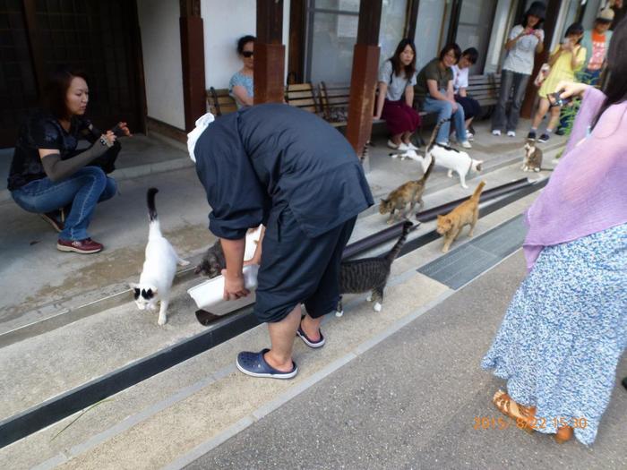 猫たちの世話は、全国各地から修行のために集った約30人の若い僧侶たちがしています。御誕生寺では僧侶たちと猫たちが一緒に暮らしているんですね。