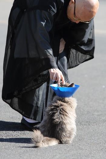 この方が板橋興宗住職。 捨て猫や傷病猫を保護・飼育して、保護された猫たちの里親を探しています。 カラーを巻いている猫を労わる住職。 「いつもありがとう」という猫の気持ちが伝わってきますね。