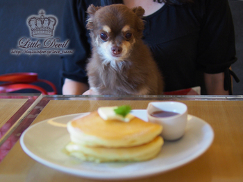 こちらはふわふわのパンケーキです。犬連れのお客さんも多く、愛犬とのんびりお食事することができる雰囲気があります。