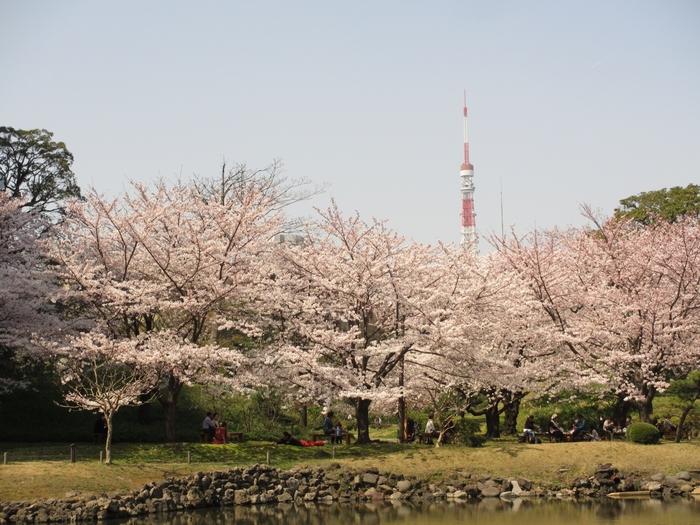 浜松町、大門の近くと言うこともあり、東京タワーと桜の都会ならではのコントラストを楽しむことが出来ます。