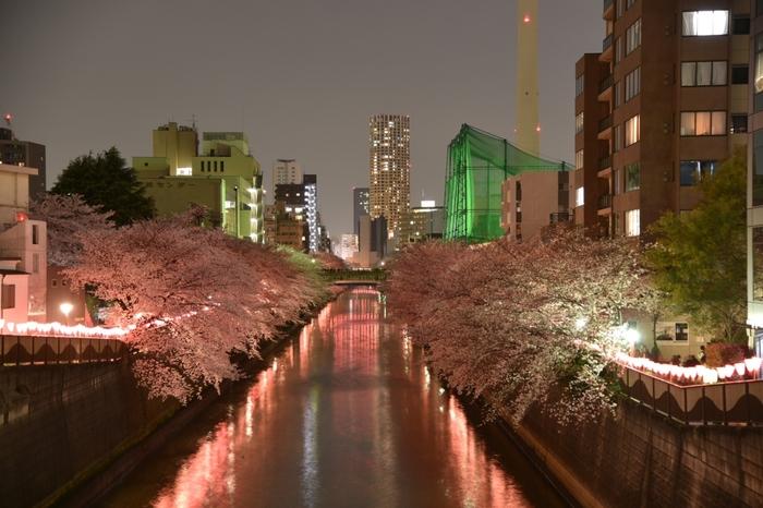 夜になると桜と目黒川、ライトアップの絶妙なハーモニーを楽しむことが出来ます。