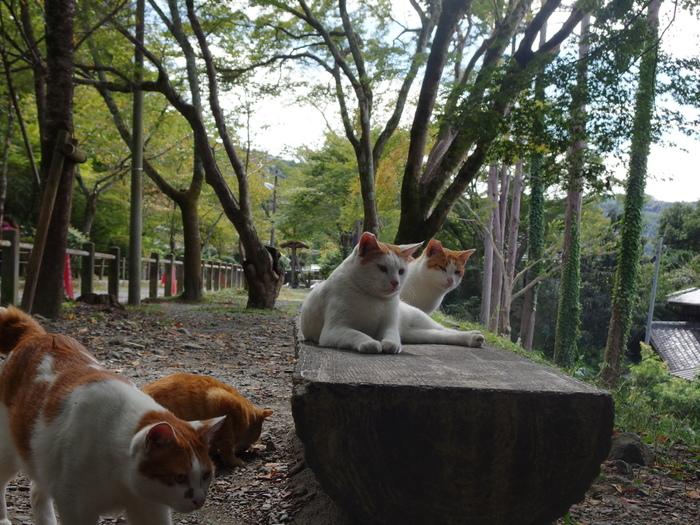 その道が今や、猫たちが散策する小径に。 お花見と猫見が楽しめる、絶好のスポットになっています。