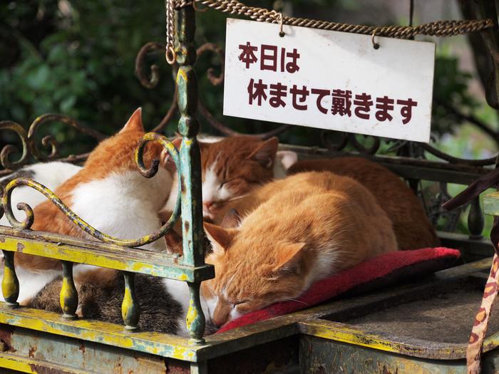 かわいらしい猫たちに見とれていたら、なかなか前に進めそうにありません…。