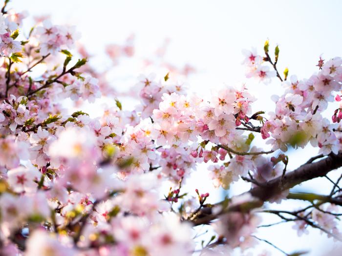 日本さくらの名所100選にも選ばれている清水公園は、ペットOK!わんちゃんのお散歩兼ねてお花見もできるので、今から春が待ち遠しくなりますね。