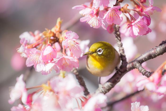 千葉県の南部、南房総は、海と山、多くの自然が溢れ、温暖な気候でもあるのでとても過ごしやすいスポットなんです。南房総にはすでに春が溢れていて、自然に触れたり、ゆったりとお茶ができるスポットがたくさんあります。