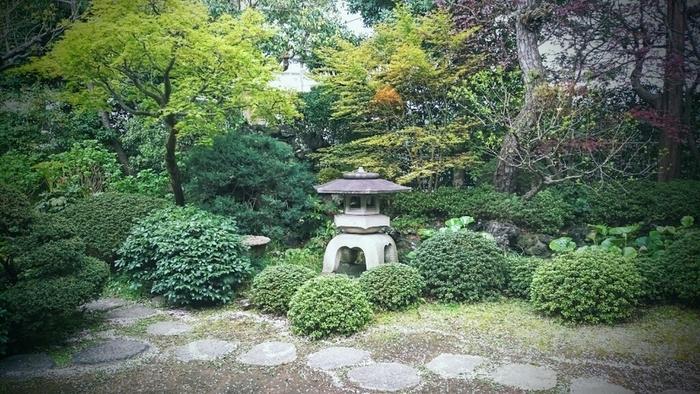 吸い込まれるような緑、苔や木の幹、言い表しがたい美しい日本の景色です。