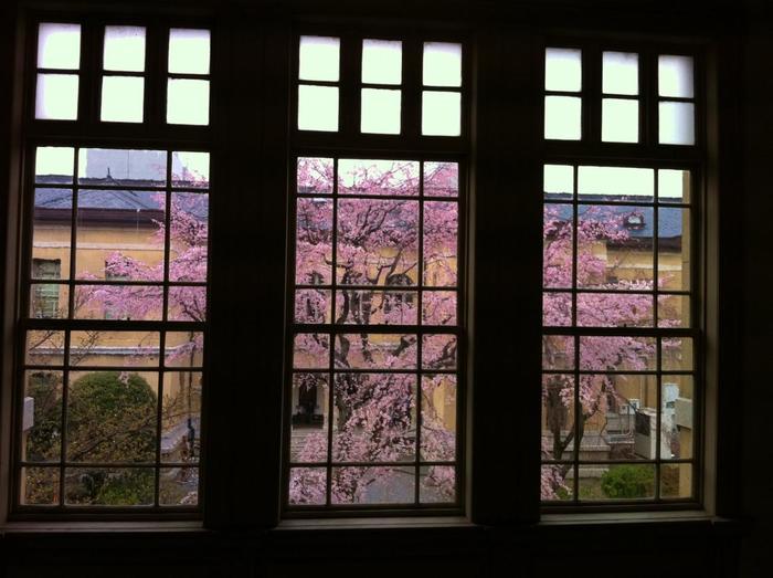 【中庭の枝垂れ桜は、円山公園の『祇園枝垂れ桜の』子孫の桜です。】