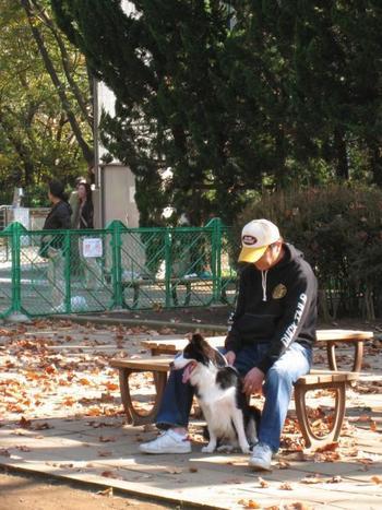 公園内にあるドッグランは週末になるとたくさんのワンちゃんが集まります。利用するには事前登録が必要なのでご注意ください。
