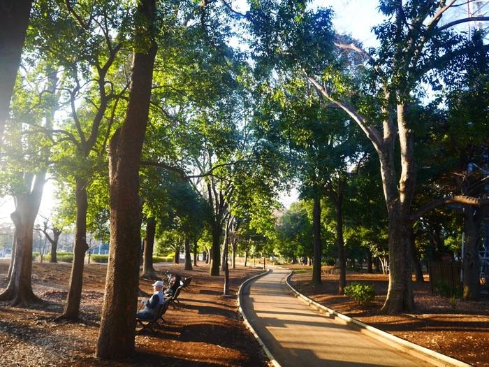 駒沢オリンピック公園は、ジョギング、サイクリング、テニス、サッカー、野球等あらゆるスポーツが楽しめます。  もちろん犬の散歩をしている方々もたくさんいらっしゃいます。カフェでゆっくりしたら公園でお散歩してみてはいかがでしょうか?