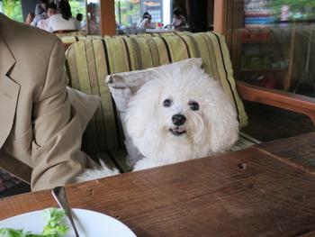飼い主さんにとって愛犬と外食できるのはとても嬉しく楽しいものです。しかし、犬同伴OKのお店にはそれぞれルールがあります。犬連れの方もそうでない方もみんなが気持ちよく利用できるようにルールはきちんと確認しておきましょう。