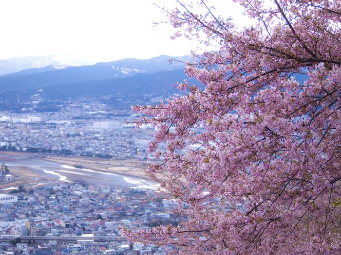 いかがだったでしょうか?今年は桜を見るだけではなく、頂く楽しみも是非味わってみてくださいね。