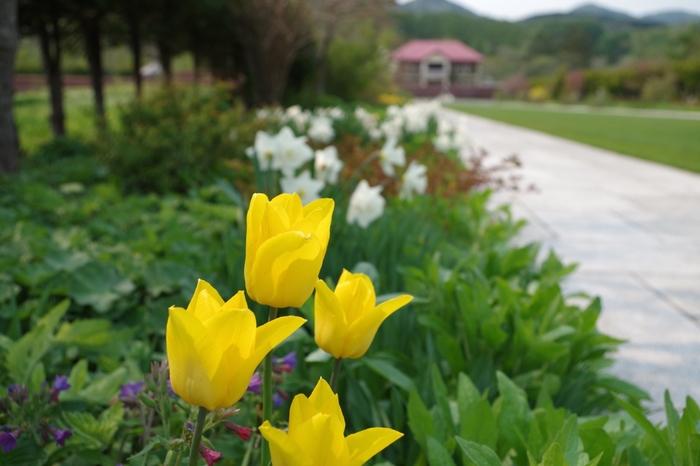 花とハーブをテーマにした「風薫る英国風庭園」。正統派のイングリッシュガーデンと、どこまでも広がる広い空は、日本にいることを忘れそうな風景です。
