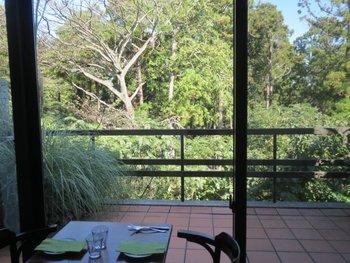 店内はシンプル・シックな内装です。  窓からの景色も、緑の木々に囲まれてとても落ち着けます。こんな風景もお料理の一部と言えそうです。