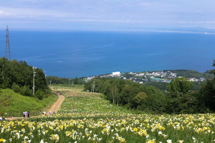 小樽から少し札幌寄りにある春香山は、日本海を見渡せるスキースポットとして人気。この斜面に213万輪のゆりが花開く、北海道最大級のゆり園が夏限定でオープンします。