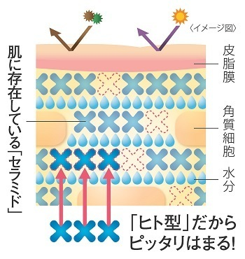 """[ヒフミド]エッセンスクリームの最大の特長は、人の皮膚に存在するセラミドと全く同じ構造のセラミド""""ヒト型セラミド(※2)""""が配合されていること。しかもその保水力は、多くのスキンケアアイテムで使用されている合成セラミドの約3倍(※3)。同じ構造なので、角質層に自然に浸透し、保水力を発揮してくれるのです。角質層が潤うことでバリア機能(※1)もアップするので、さまざまな肌トラブルからも肌を守ってくれます。  ※1 保湿機能 ※2 天然型セラミド(保湿剤) ※3 Fragrance J.,10,75(1999)"""