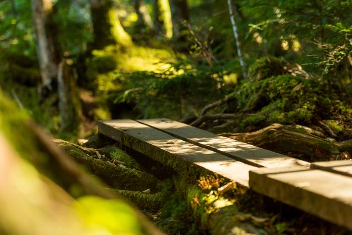 「白駒池」を一周する散策道が整備されているので、歩きやすいでしょう。