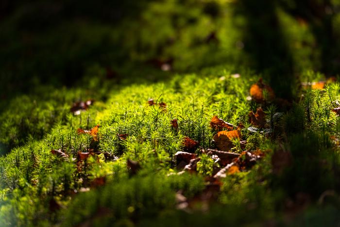 さまざまな苔が、それぞれに群れをなして生命を育んでいる。