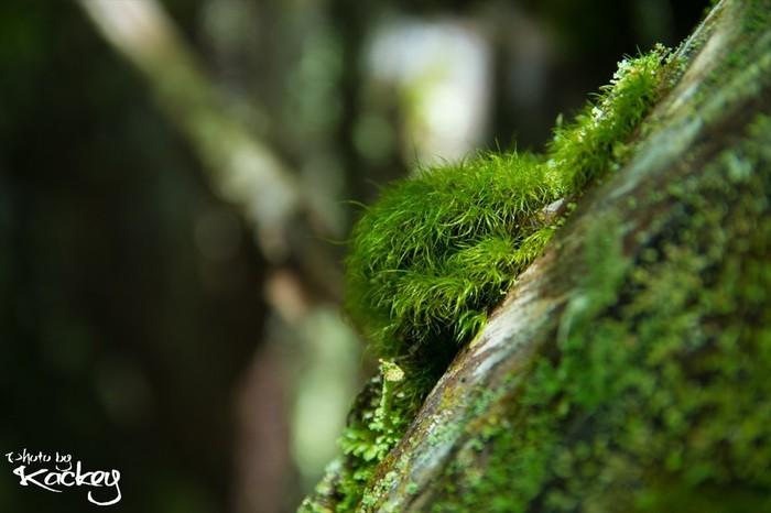 苔の種類が豊富な「白駒池」周辺。