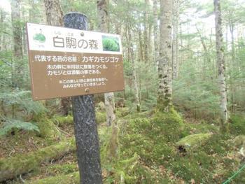 苔の宝庫「白駒の森」