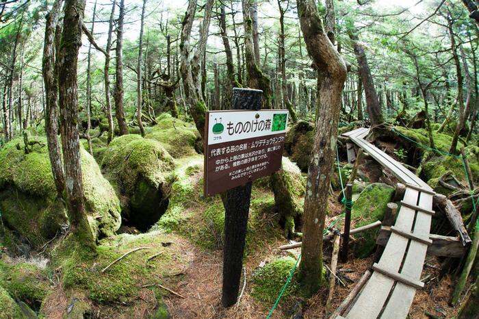 個性豊かな苔の姿をみれる「もののけの森」。