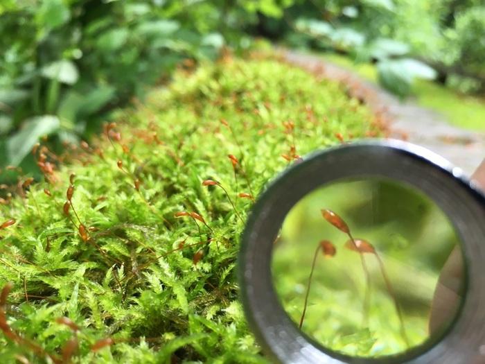 「苔の森」に広がる苔の種類は、485種類にも上ります。 苔のスペシャリストと共に、じっくりと観察してみてはいかがでしょう?  (写真はイメージです)