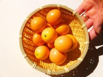 昔から金柑は「金橘(かんきつ)」という名前で漢方薬にも使われるほど薬効が高く、民間療法でも風邪予防や喉が痛い時に食べる代表食品でした。 そんな金柑が持つ代表的な栄養素を3つご紹介します!