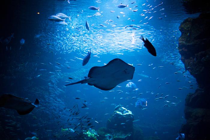 幻想的な海の世界が広がります。