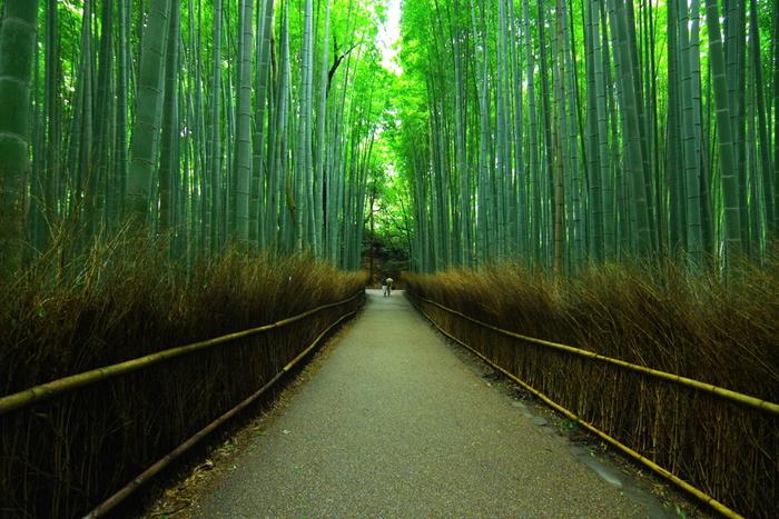 京都の有名な観光地「嵐山」から徒歩で行ける、嵯峨野の竹林。見渡す限りの青々とした竹林からは、涼しい風が吹いてきます。日中は人出が多いので、早朝に行くのがおすすめ!