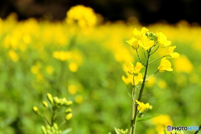 """""""趣味はカメラ""""なカメラ女子にとって、お洒落な雑貨や美味しそうな食べ物は絶好の被写体ですが、見渡す限りの美しい花畑も写真に撮っておきたいですよね。  そこで3月~5月にかけて見頃を迎える、九州各県の花畑をセレクトしてみました。ご近所ならお弁当持ってピクニック気分で、遠地なら撮影旅行と洒落込んでぜひお出かけしてみてくださいね!"""