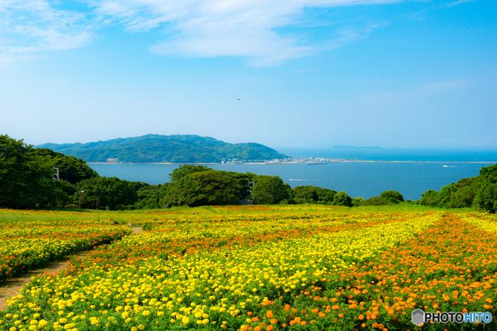 1月から咲く水仙を皮切りに1年中なにかしらの花が咲いている自然公園です。写真は夏のマリーゴールド畑ですが、例年2月下旬から4月までが見頃の菜の花畑は向こうに海を望み、黄色と青のコントラストがとても綺麗。行き交う船がまたいい絵になりますね。