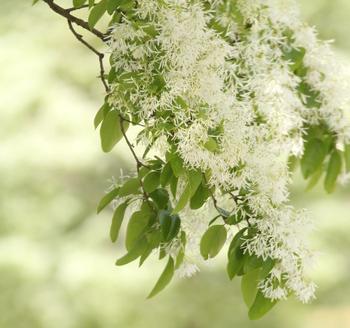 今回は写真を眺めるだけでもうっとりとため息が出そうな、美しい花畑を中心にご紹介しました。南国・九州ならではの希少な花木や珍しい品種などもたくさんありますので、是非この素晴らしい絶景をご自分のカメラにも納めてみてくださいね。