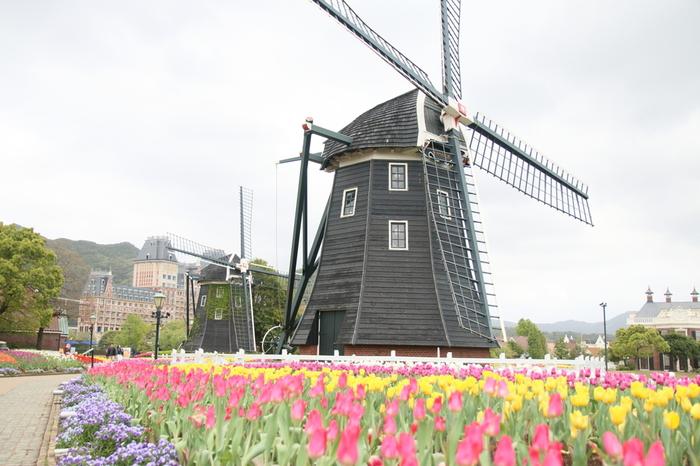 有名どころではありますが、九州の春はこのチューリップ畑抜きには語れません。700種類のチューリップが広大な敷地のあちらこちらで咲き誇り、風車や宮殿など異国情緒漂うハウステンボスを美しく飾ります。またチューリップ祭の最終日にはプランターに咲いているチューリップを摘んで持ち帰ることも出来るんです。