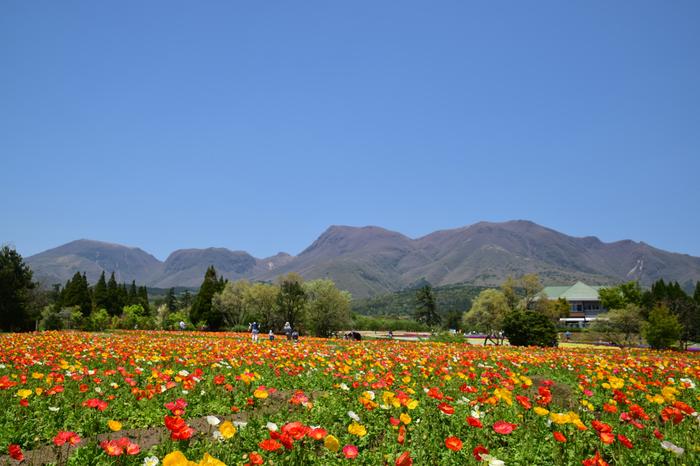 青一色の光景も夢のように素敵ですが、色とりどりの花が咲き乱れる光景も捨てがたい。長閑な風景に心も癒されます。