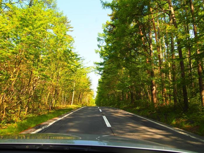 長野から向かうと、市街の喧騒が嘘のような静けさに包まれます。このラインは、森林の中を進むドライブにはうってつけのワインディングロード。清涼な空と、森林の緑や紅葉、そして鳥の歌声が楽しめる道です。 (画像は戸隠バードライン)