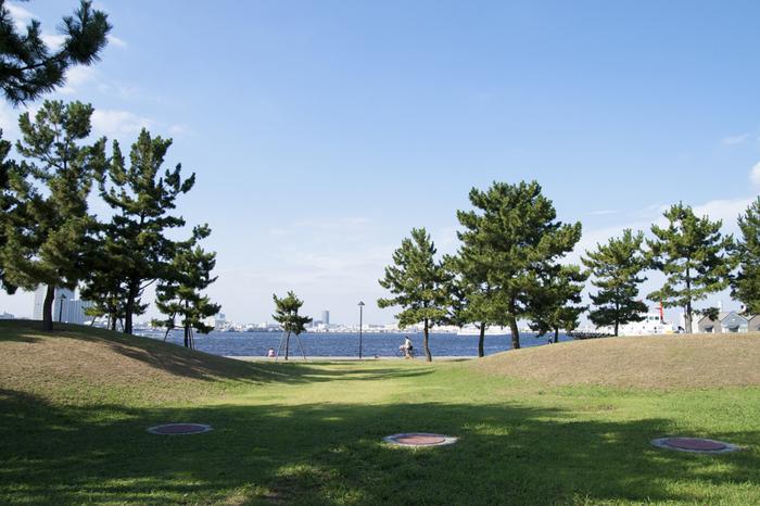 この公園の特徴は、起伏のある芝生と所々に植えられた黒松。日本らしい風景を港の風景とともにゆったりと楽しめます。