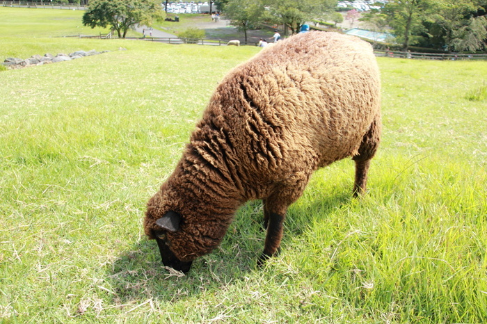 「まかいの牧場」は、朝霧高原の開拓期から牧場運営を続けてきた歴史ある牧場です。開拓と酪農のスピリッツを失わず、農業と手作りにこだわり、自然や動物と共存する楽しさを伝えることを大切にしています。