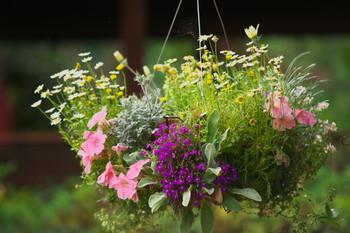 ハンギングバスケットで吊るして華やかに。水はけもよく蒸れないのでうまく花が根付けば長く楽しめます。あまり乾燥に弱くない花がおすすめ。