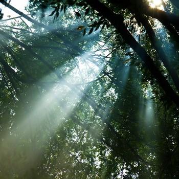 普段なにげなく使っている言葉の中には、先人たちの知恵と祈りが詰まっています。日常の中で少し、意識を言葉のほうに向けてみると、いつもの毎日がキラキラと輝いて見えてくるかもしれませんよ。